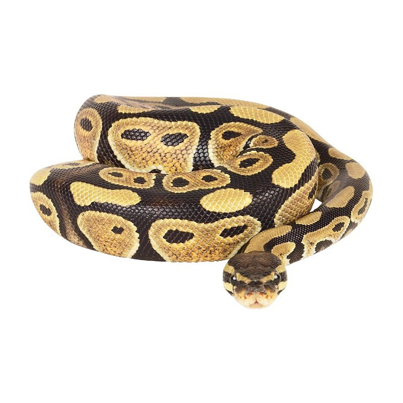 Creme venin de serpent : Soin anti rides & anti âge