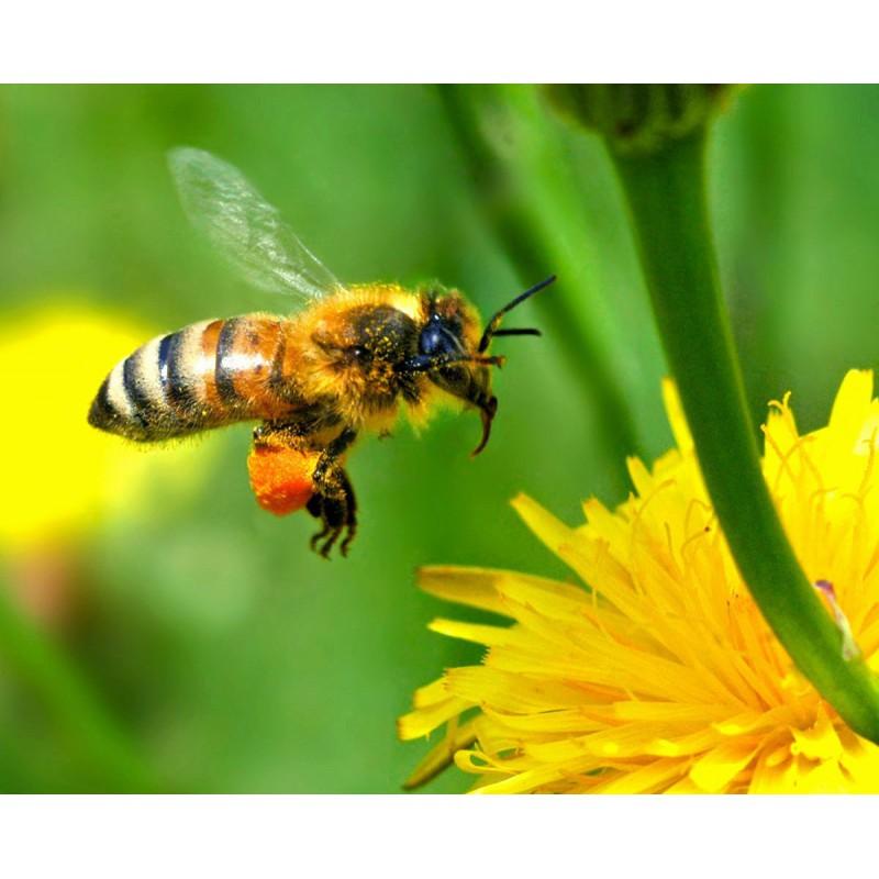 Cosmétiques venin d'abeilles